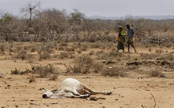 Somali PM: 110 people have died in 48 hours in one drought-hit region of Somalia